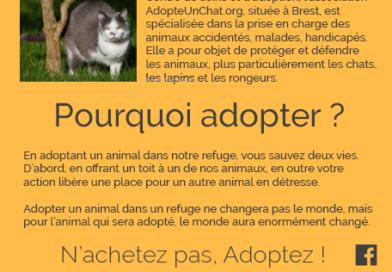 Lancement de notre campagne «N'achetez, pas adoptez dans les refuges»