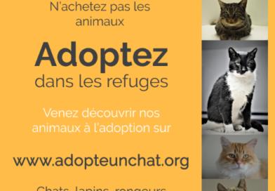 AdopteUnChat.org   Lettre d'information n°2 du 8 avril 2018