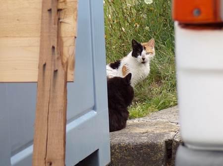 Le rôle des chats sur la base opérationnelle de l'Île Longue